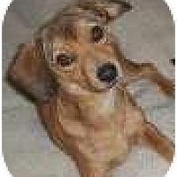 Adopt A Pet :: Coby - Only $65 adoption fee! - Litchfield Park, AZ