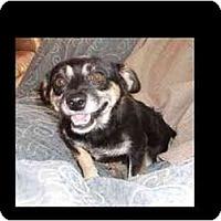 Adopt A Pet :: Mac Surl-E - Phoenix, AZ