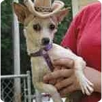 Adopt A Pet :: chico - Pembroke Pines, FL