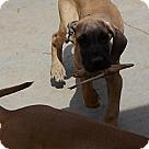 Adopt A Pet :: Gabriel