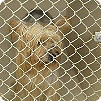Adopt A Pet :: Beth - Lorain, OH