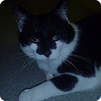 Adopt A Pet :: Carley - Hamburg, NY