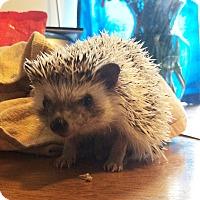 Adopt A Pet :: Lola - Williston, FL