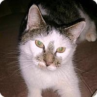 Adopt A Pet :: Lana - Turnersville, NJ