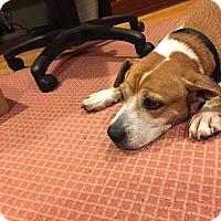 Adopt A Pet :: Lady - Long Beach, NY