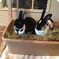 Adopt A Pet :: Bebe and Fifi - Williston, FL