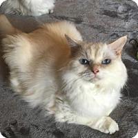 Adopt A Pet :: Knut - Davis, CA