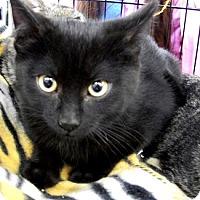 Adopt A Pet :: Miles - Castro Valley, CA
