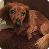 Adopt A Pet :: Larry - Humble, TX