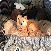 Adopt A Pet :: El Paso - conroe, TX