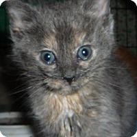 Adopt A Pet :: Vanilla - Dallas, TX