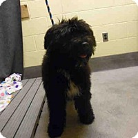 Adopt A Pet :: *DARBY - Upper Marlboro, MD
