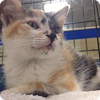 Adopt A Pet :: Polly - Gainesville, FL