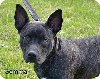 Terrier (Unknown Type, Medium) Mix Dog for adoption in DuQuoin, Illinois - Gemma