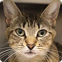 Adopt A Pet :: Ellen - Sarasota, FL