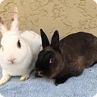 Adopt A Pet :: Pickle & Olive - Bonita, CA