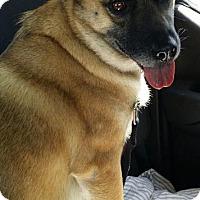 Adopt A Pet :: Maxine - Valley Park, MO