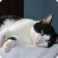 Adopt A Pet :: Patience - Courtesy Listing - Sparta, NJ