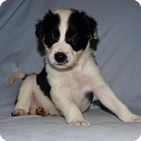 Adopt A Pet :: Grumpy - Charlotte, NC