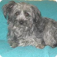 Adopt A Pet :: Babe - Ridgway, CO