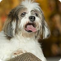 Adopt A Pet :: Leela - Anchorage, AK
