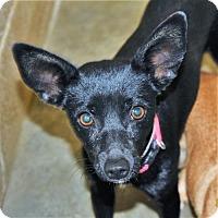 Adopt A Pet :: Cicely - San Jacinto, CA