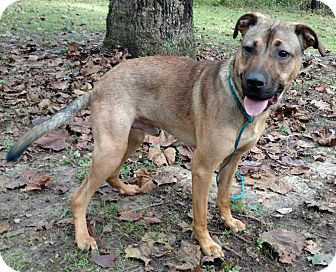 Shepherd (Unknown Type) Mix Dog for adoption in Capon Bridge, West Virginia - Kurtis