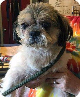 Standard Schnauzer/Dachshund Mix Dog for adoption in Matawan, New Jersey - Rambler