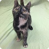 Adopt A Pet :: Ralphie - Downingtown, PA