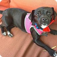 Adopt A Pet :: Abbie - Los Angeles, CA