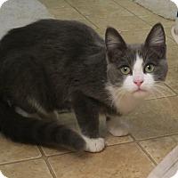 Adopt A Pet :: Sherlock - Bedford, VA