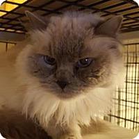 Adopt A Pet :: Sasha - Tucson, AZ