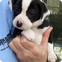 Adopt A Pet :: Mimzy - Athens, AL