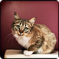 Adopt A Pet :: Maleah (Courtesy Post) - Asheville, NC