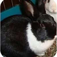 Adopt A Pet :: Daisy - Maple Shade, NJ