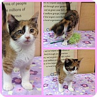 Adopt A Pet :: Mya - Modesto, CA