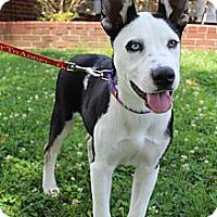 Adopt A Pet :: LiLu - Wytheville, VA