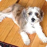 Adopt A Pet :: Clawdia - Hollis, ME