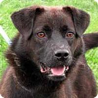 Adopt A Pet :: Kent - Germantown, MD