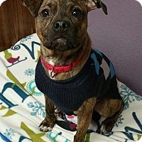 Adopt A Pet :: Parker - Lisbon, OH