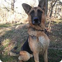 Adopt A Pet :: Bell - Louisville, KY