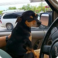 Adopt A Pet :: Bandit - Sussex, NJ