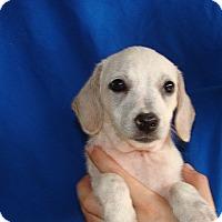 Adopt A Pet :: Sara - Oviedo, FL