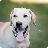 Adopt A Pet :: Mister - Daleville, AL