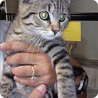 Adopt A Pet :: Kaine - Franklin, NH
