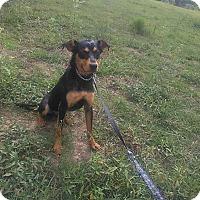 Adopt A Pet :: Brinks - Greeneville, TN