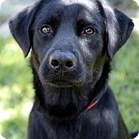 Adopt A Pet :: Charcoal - Groton, MA