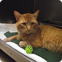 Adopt A Pet :: Mikey - Chambersburg, PA