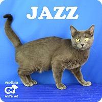 Adopt A Pet :: Jazz - Carencro, LA