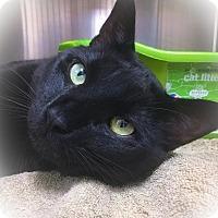 Adopt A Pet :: Sheik - Webster, MA